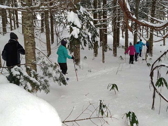 ブナ林をスノーシューで散策!