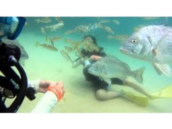手軽に壱岐の海中を探検!体験ダイビングプラン