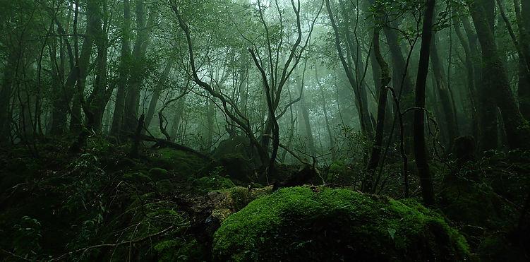 神秘的な苔むす森を歩く!白谷雲水峡トレッキング!