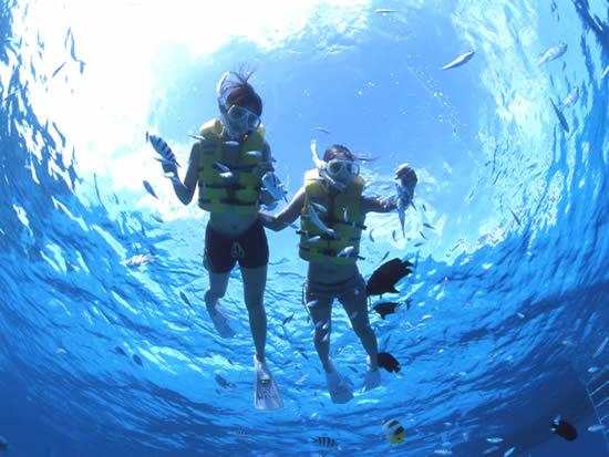 慶良間チービシ環礁クエフ島近海シュノーケリングツアー<7-9月>