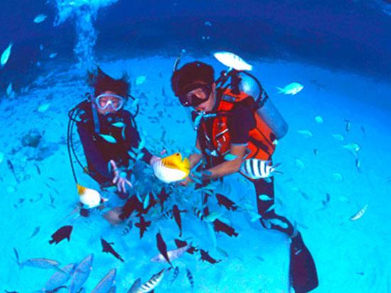 慶良間チービシ環礁クエフ島近海体験ダイビングツアー