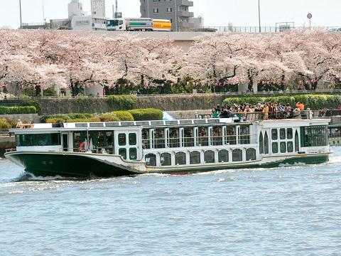 桜満開の隅田川の並木を船上からご覧頂けます!