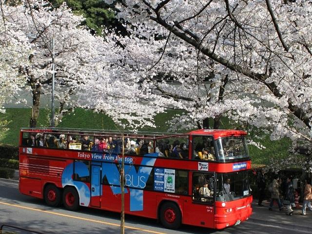 日本初、2階建てオープンバス「スカイバス」で、桜景色の皇居パノラマ観光ツアーをお楽しみください!