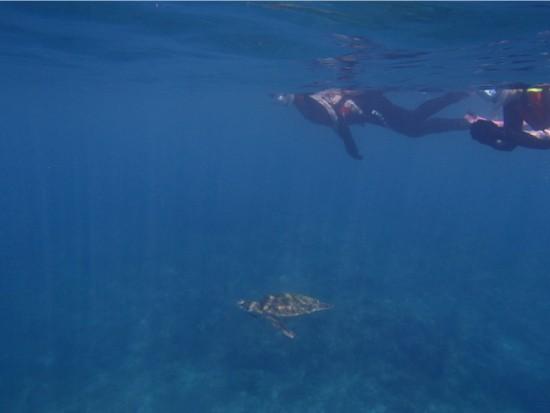 ウミガメスノーケリング