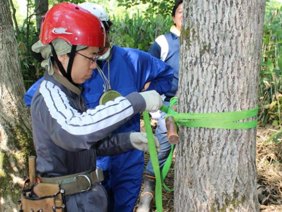ロープを使って木登り!木上の景色を見てみよう