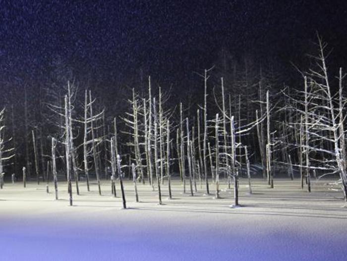 白金青い池ライトアップ(イメージ)