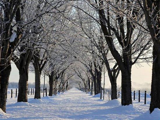 厳冬期の早朝にこのアクテビティのためだけに特別営業します。