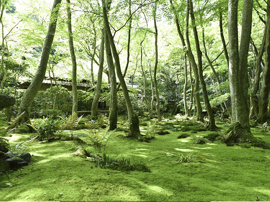 祇王寺 苔庭