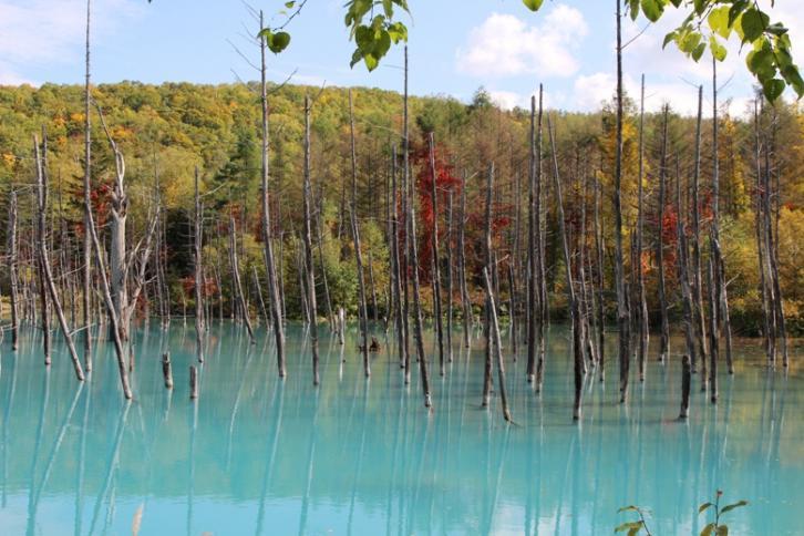 白金の青い池(初秋)