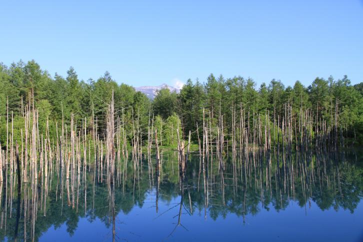 白金の青い池(夏イメージ)