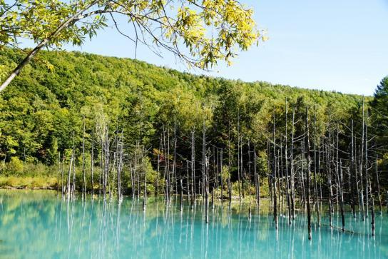 白金 青い池