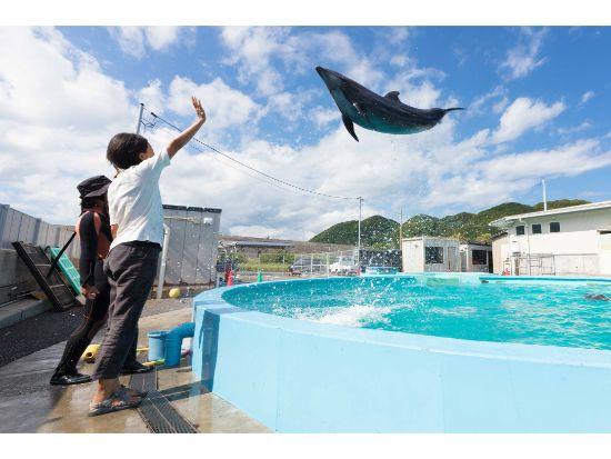 トレーナー体験でイルカをジャンプさせよう。