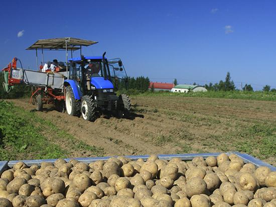 オホーツクの秋はジャガイモの収穫で大忙し。