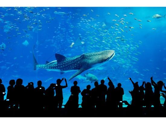 琉球村チケット&美ら海水族館チケット