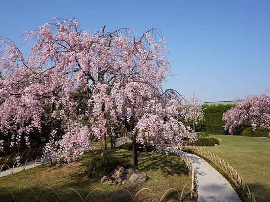 <U>いっぷく亭 たけのこ料理と春の花=青もみじめぐり/京都定期観光バス