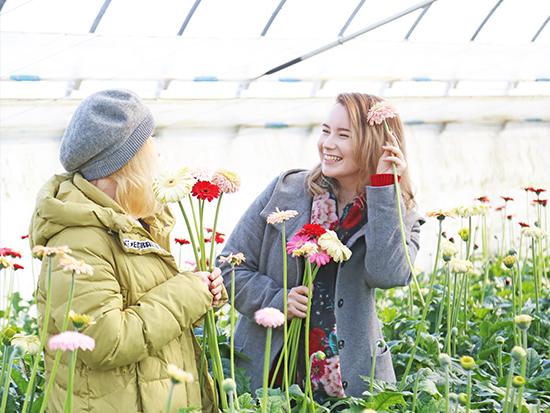 彩鮮やかなガーベラを摘んで花束を作ろう