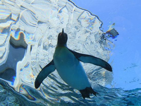 日帰りバスツアー:旭山動物園・1DAYピクニック号