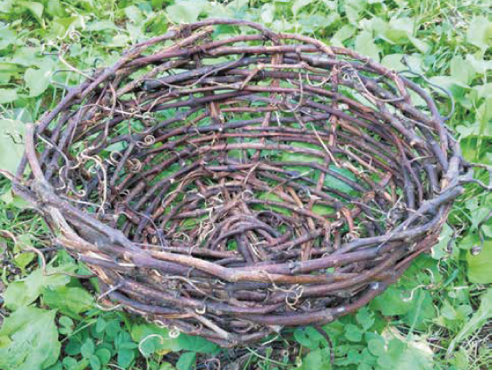 Making a basket weaving with grape vines