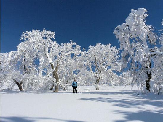 スノーシューで行く!大雪山国立公園【1DAYプログラム】