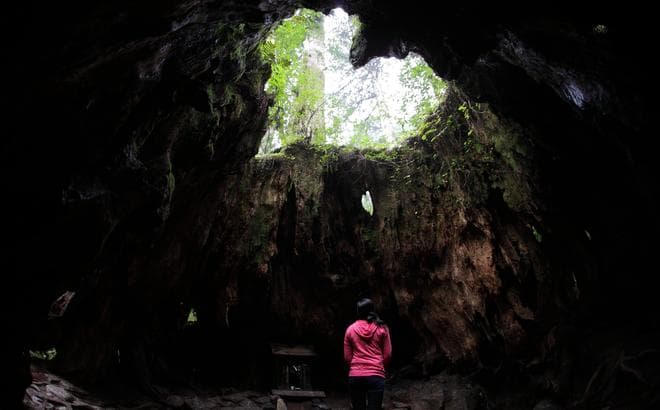 縄文杉トレッキング+AM白谷雲水峡もののけの森まで2日間格安ツアー