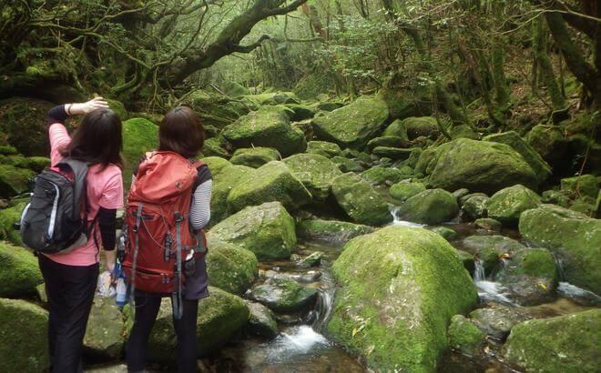 屋久島 半日白谷雲水峡ガイドツアーもののけの森まで