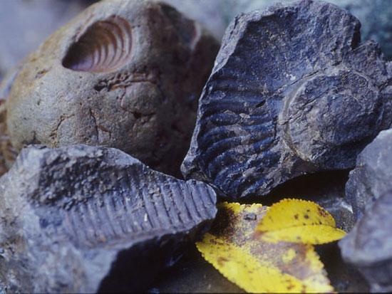 【夏季】富良野 秘密の穴場で化石採取