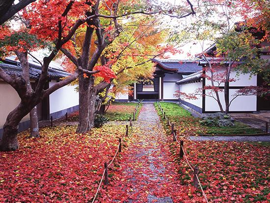 黄梅院唐門と紅葉