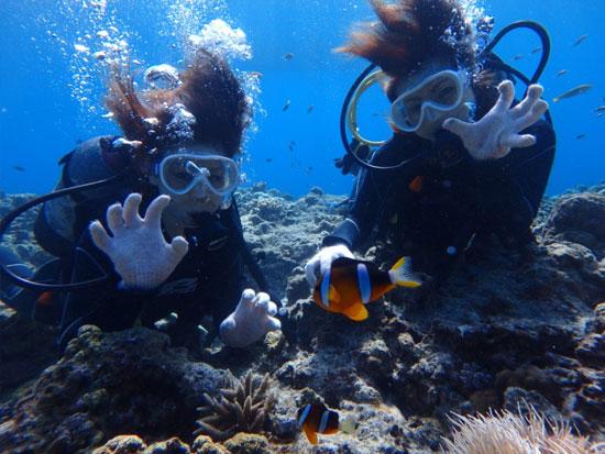 本部発 美ら海パラセーリング+体験ダイビング