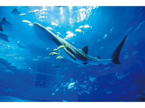 美ら海水族館 ※イメージ画像