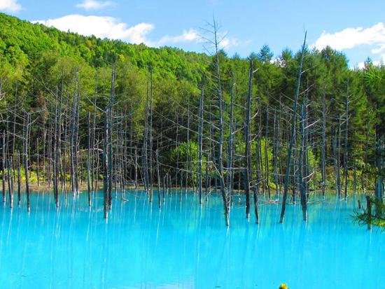 青い池は、その青さが、まわりの風景に溶け合い、神秘的な雰囲気を作り出します。