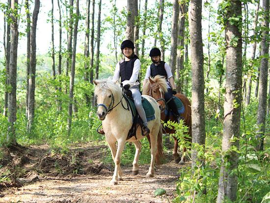 馬に乗って森林探索をしてみよう! 初心者OK♪