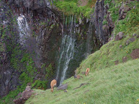断崖から流れ落ちるフレペの滝。 四季を通じて見に行くことができます。