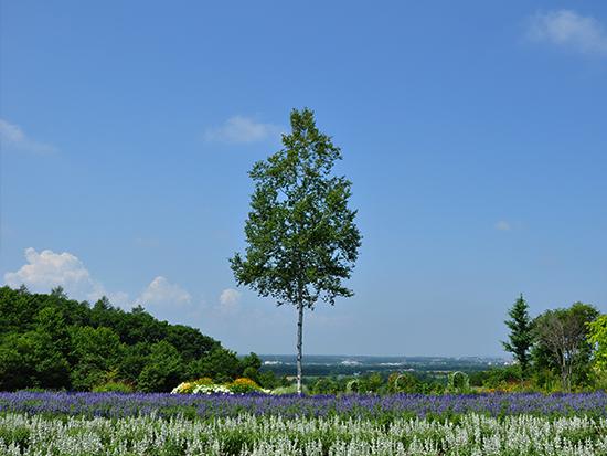 ≪スカイミラー≫レストラン前に広がるスカイミラー。澄んだ空と広大な十勝平野を臨むヒルズの象徴です。絶好のロケーションで、十勝を存分に堪能してください。ストライプ状に植えられた花は、春と夏に入れ替わります。