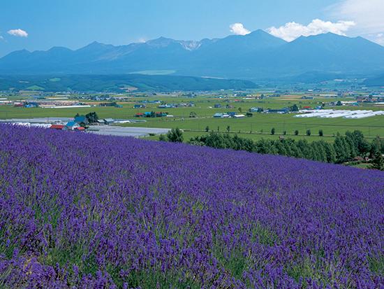 園内にはドライフラワーを使用した土産屋や資料館もある、北海道のラベンダー畑「ファーム富田」